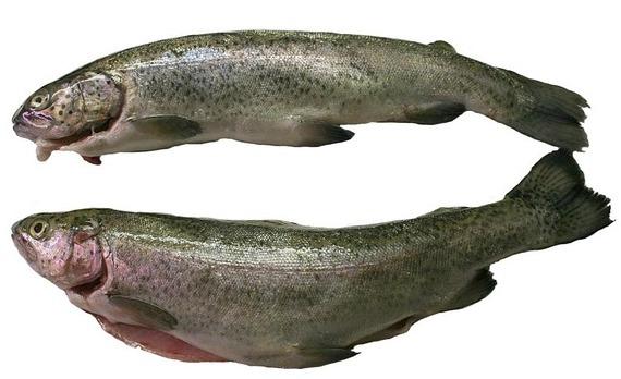 trout-74240_640