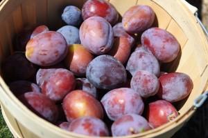 Slivky, modrofialové liečivé ovocie z našich záhrad