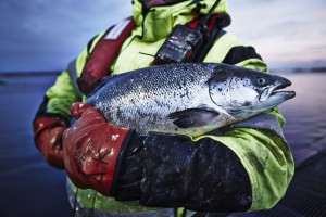 IKEA ponúka ryby a morské plody zo zodpovedne riadených zdrojov až 600 miliónom svojich zákazníkov