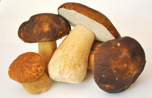 mushroom-913499_640