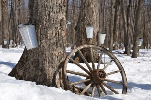 maple-syrup-1169896_1280
