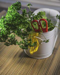 herbs-1007053_1280