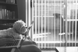 black-and-white-image-of-woman-sitting-on-sofa-and-working-on-laptop-with-dog-beside - Copy