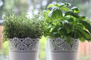 herbs-1476043_1280