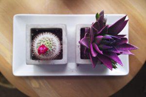 Umenie postarať sa o izbové rastliny